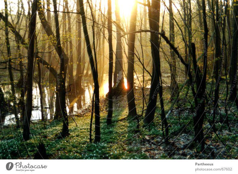 Morgendämmerung Wasser Baum Sonne Wald Wiese Nebel