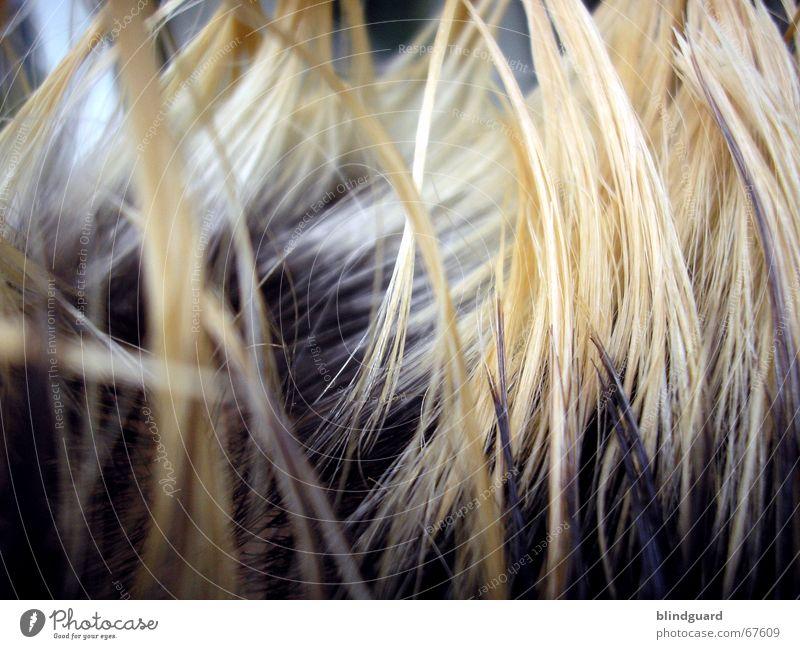 Haar-I-Krischna Haare & Frisuren blond gebleicht färben Haarsträhne Haarstrukturen Detailaufnahme Bildausschnitt Anschnitt Haarspitze Farbe