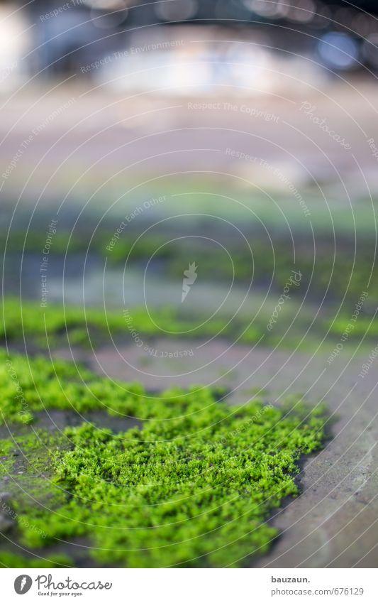 ut ruhrgebiet | ohne moos nix los. Fabrik Natur Pflanze Moos Industrieanlage Ruine Bauwerk Beton entdecken Wachstum Unendlichkeit grau grün Kraft Einsamkeit