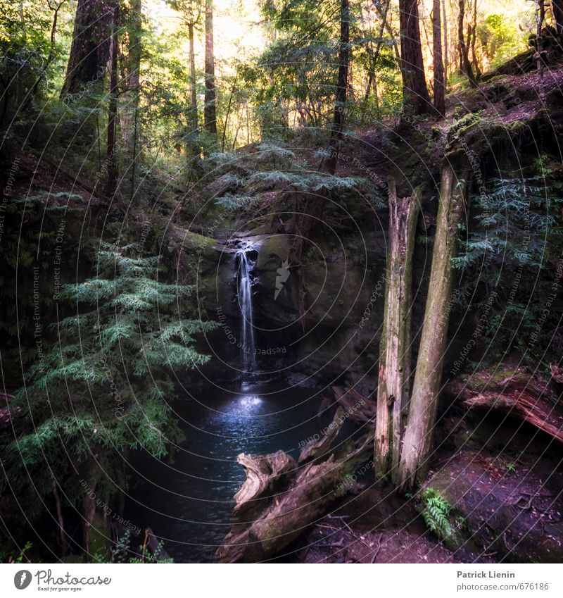 Sempervirens Falls Natur Ferien & Urlaub & Reisen Wasser Pflanze Sommer Baum Erholung Landschaft ruhig Ferne Wald Umwelt Freiheit Zufriedenheit Ausflug