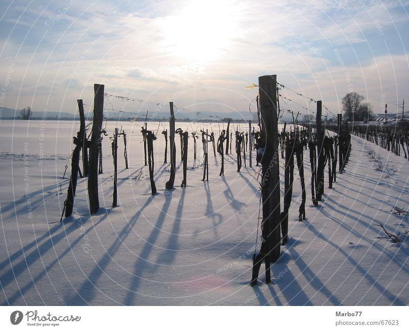 Weingarten im Winter Schnee Weinbau