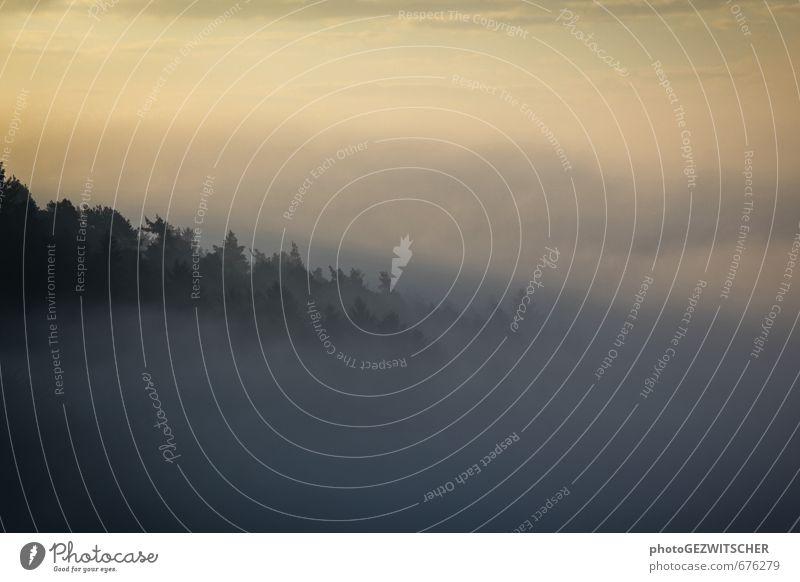 Nebel Natur Landschaft Himmel Sonnenaufgang Sonnenuntergang Herbst Baum Wald Stimmung Farbfoto Außenaufnahme Textfreiraum oben Textfreiraum unten Morgen