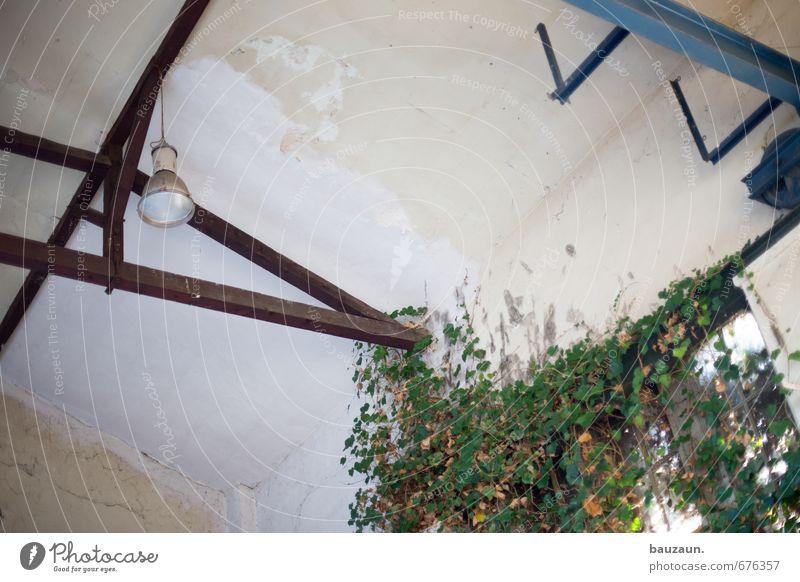 ut ruhrgebiet | an die decke gehen. Natur grün Pflanze Blatt Wand Gebäude Mauer Holz Lampe Linie Metall Fassade Wachstum hoch Beton Dach