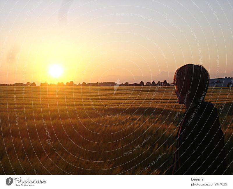 Blick zur Sonne Himmel Sonne Feld