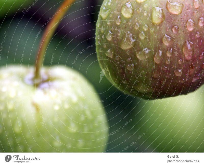 das ist ja wohl das Letzte! grün dunkel Frucht Ernährung Wassertropfen lecker Stengel Wut Ernte Apfel fruchtig knackig Apfelbaum hydrophob Gartenobst hängen lassen