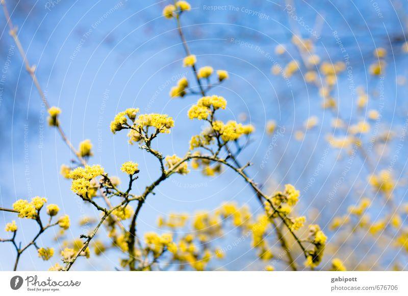 Blühling II Natur Himmel Sonne Sonnenlicht Frühling Schönes Wetter Pflanze Baum Sträucher Blüte Blühend Freundlichkeit Fröhlichkeit natürlich positiv Wärme blau