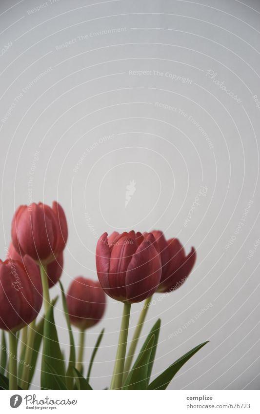 früher Ling Design exotisch schön harmonisch Zufriedenheit Erholung Raum Wohnzimmer Pflanze Gras Tulpe Blatt Blüte Blühend Duft rot Blume Vase