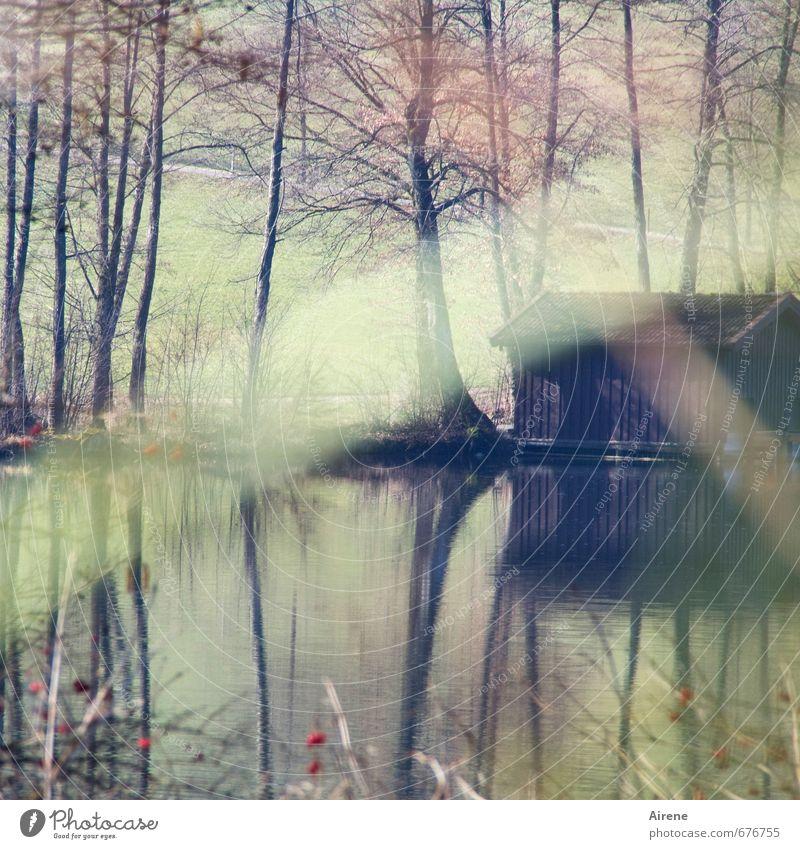 Versteck Natur Landschaft Wasser Baum Gras Sträucher Beerensträucher Seeufer Teich Streifen beobachten braun grün Einsamkeit ruhig Schutz stagnierend bleich