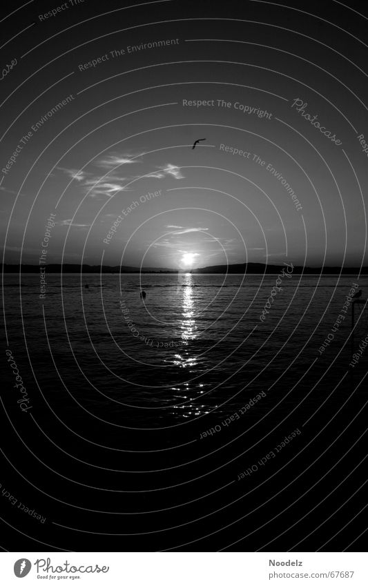 Desert Lake Wasser Himmel weiß Sonne schwarz dunkel grau See Vogel Boje