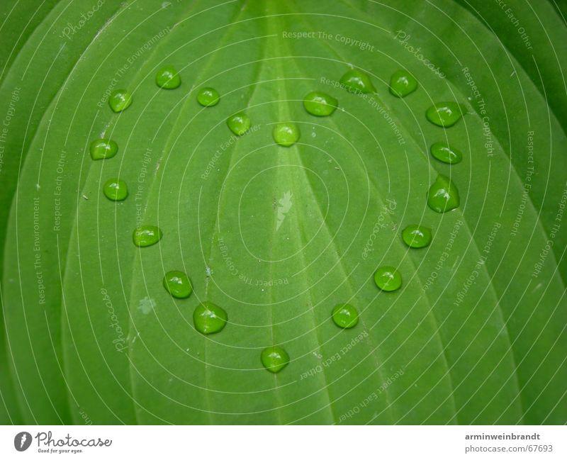___water feelings ?! Natur Wasser Blatt Liebe Gefühle Herz Romantik Leidenschaft Kreativität Symbole & Metaphern