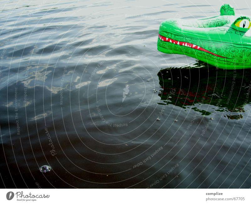 keine angst! ...der will nur spielen Ferien & Urlaub & Reisen grün Sommer Meer Freude Tier Auge lustig Spielen Schwimmen & Baden See Luft Angst Wellen Kindheit Schwimmbad