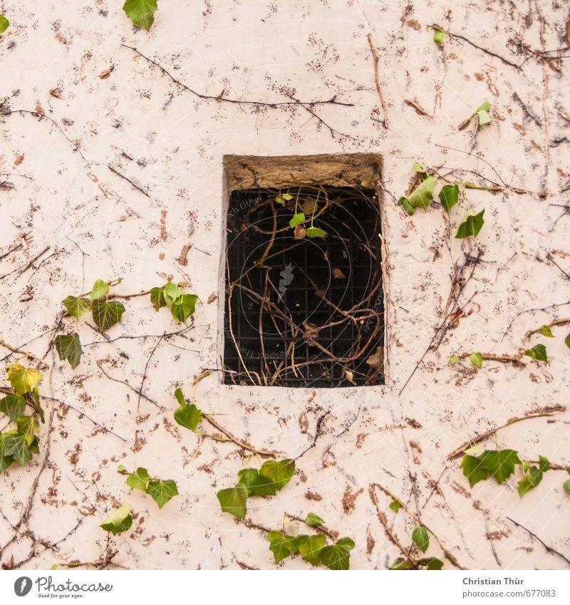 Schöne Aussichten Natur Stadt grün Pflanze Sommer Erholung Blatt schwarz Fenster Wand Mauer Gebäude braun trist wild Sträucher