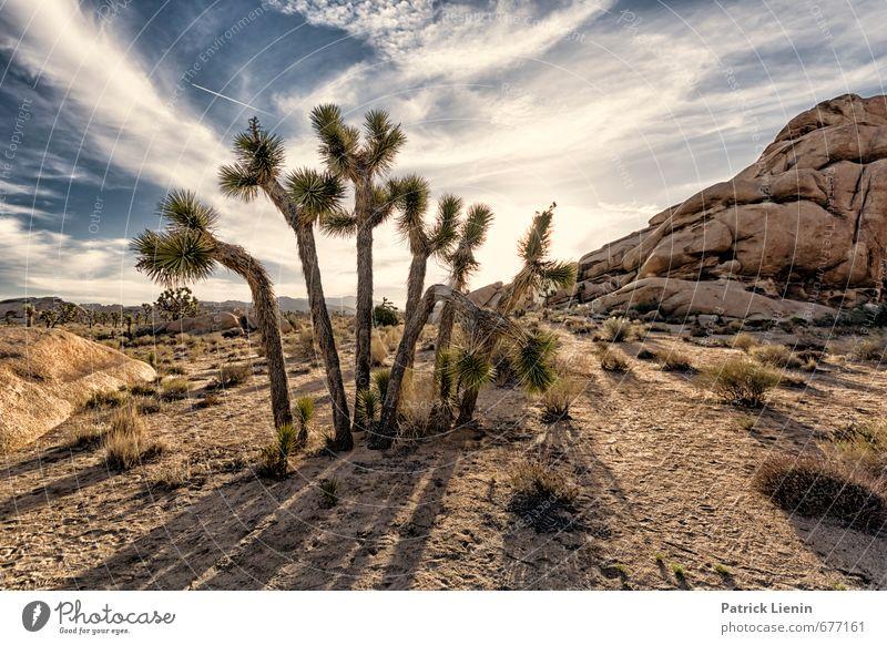 Nächstenliebe Himmel Natur Pflanze Sonne Baum Landschaft Wolken Umwelt Wärme Gras lustig Stein Sand Luft Sträucher Schönes Wetter