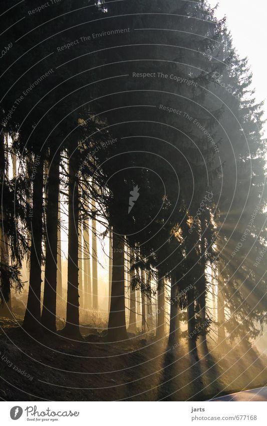 morgenstund Umwelt Natur Landschaft Pflanze Sonnenaufgang Sonnenuntergang Sonnenlicht Schönes Wetter Baum Wald frisch hell natürlich Gelassenheit ruhig Freiheit