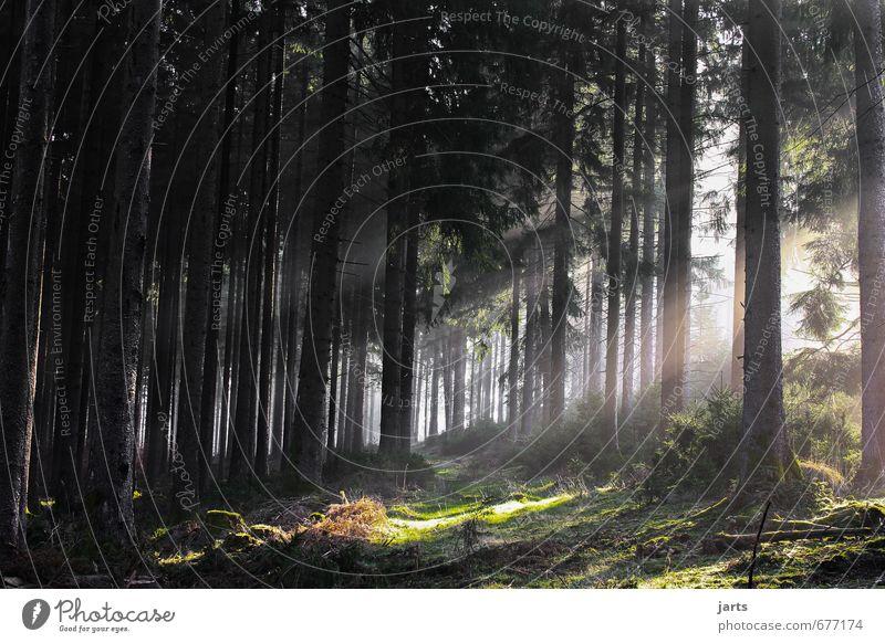 spessart wald Umwelt Natur Landschaft Pflanze Sonnenaufgang Sonnenuntergang Sonnenlicht Schönes Wetter Baum Wald frisch natürlich Gelassenheit ruhig Spessart