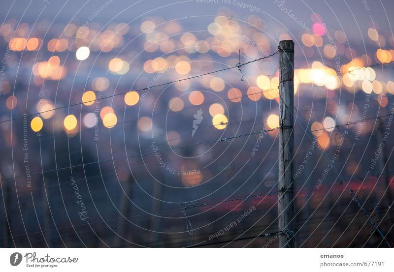 Frontfokus Natur Landschaft Winter Pflanze Hügel Stadt Stadtzentrum Stadtrand bevölkert leuchten dunkel hell hoch rund weich gelb Unschärfe Freiburg im Breisgau