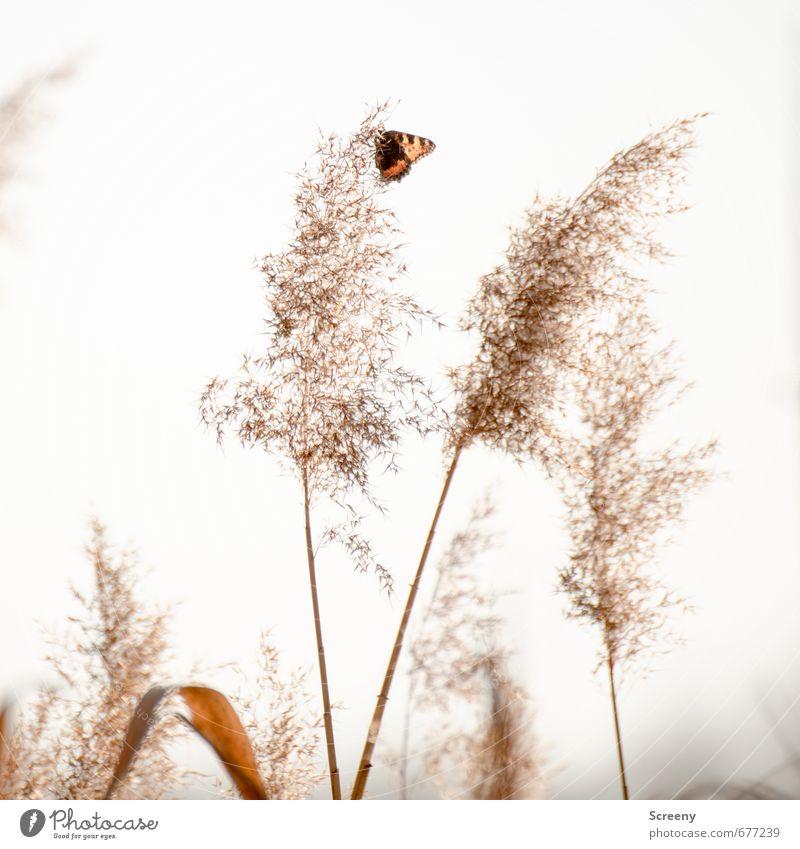 Erstflug Natur weiß Pflanze ruhig Tier Leben Gras klein Freiheit natürlich braun Zufriedenheit sitzen ästhetisch Abenteuer Seeufer