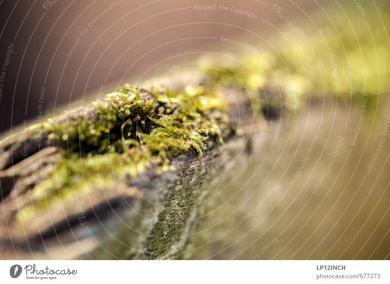 MOoSES P. Umwelt Natur Tier Pflanze Moos Moosteppich Holz weich grün Ekel Umweltverschmutzung Wachstum Bank Gras ausbreiten Farbfoto Außenaufnahme Nahaufnahme