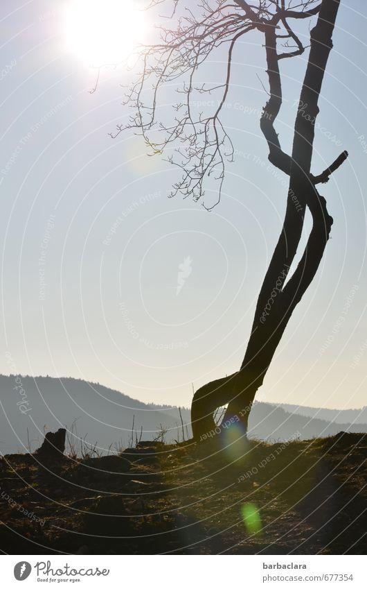Verführungskünste Himmel Natur Pflanze Sonne Baum Landschaft ruhig dunkel Umwelt Berge u. Gebirge Frühling außergewöhnlich hell Stimmung Erde leuchten