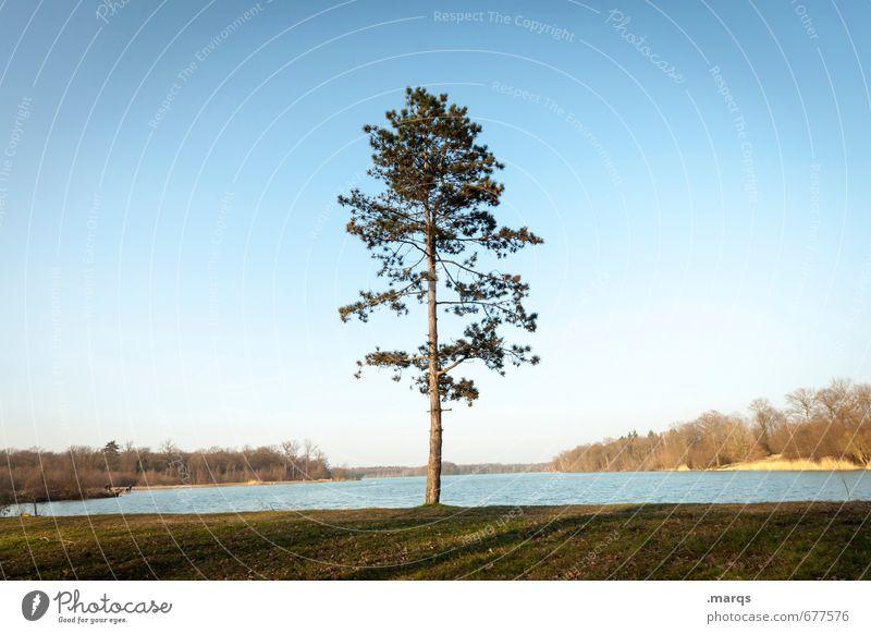 Bodenständig Natur Sommer Baum Erholung Landschaft Umwelt Wiese Frühling Horizont Freizeit & Hobby Wachstum Idylle Klima Ausflug Schönes Wetter Urelemente