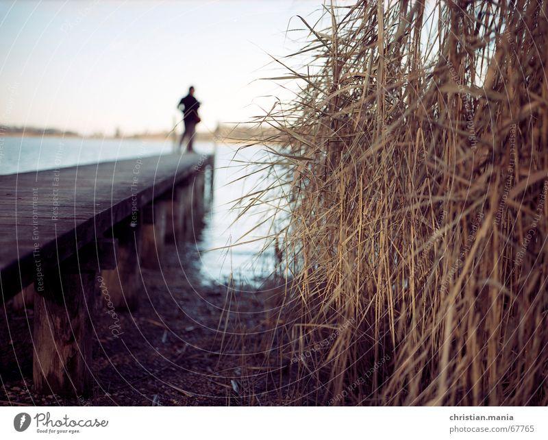 Schilf am Chiemsee Mensch Wasser Ferne See Schilfrohr Steg Bayern Tiefenschärfe