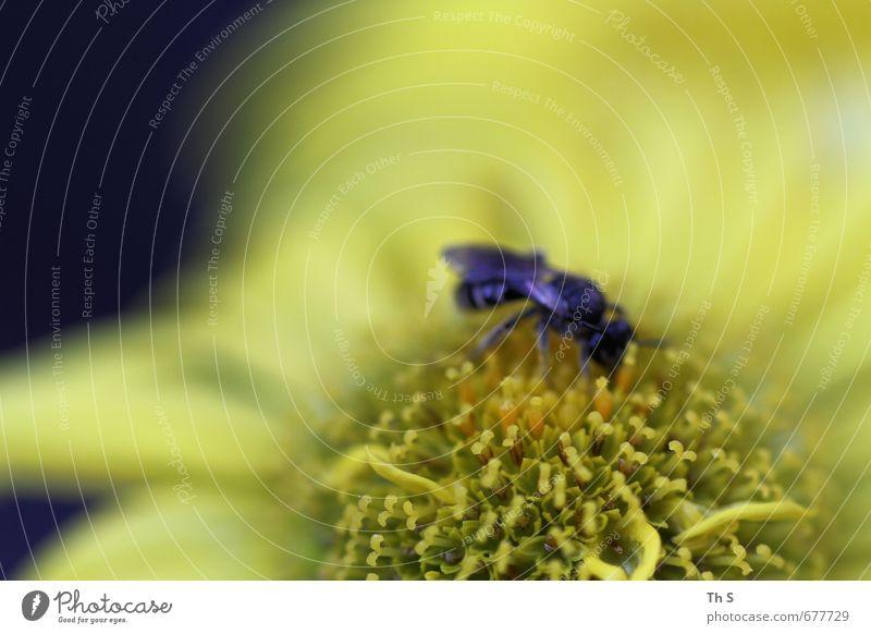 Wespe Natur schön Pflanze Erholung ruhig Tier Umwelt Frühling Blüte natürlich Idylle wild Wildtier Klima ästhetisch Blühend