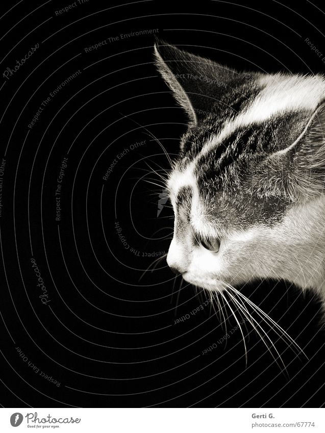 July Katze Pfote Barthaare Katzenpfote Katzenklo Fell dunkel Tierporträt Säugetier Gefühle sanft katzenjammer katjes getigert gestiefelt proträt face Blick dark