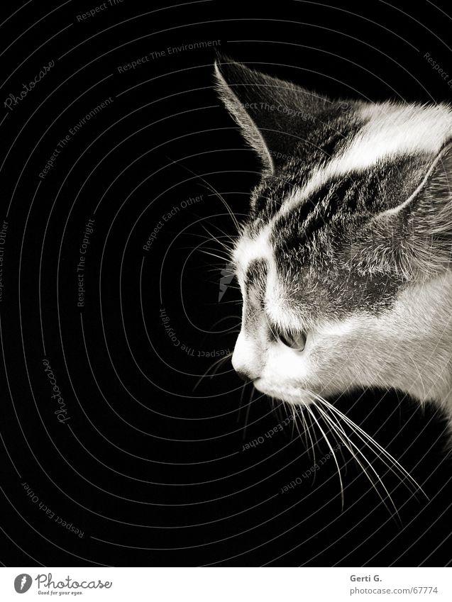 July Katze Tier dunkel Gefühle Perspektive Fell Pfote Säugetier sanft Barthaare Katzenpfote Katzenklo