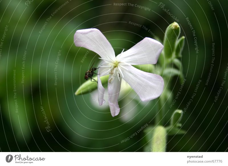 Blumen Natur grün Pflanze Erholung Garten Freiheit Park Fliege Insekt