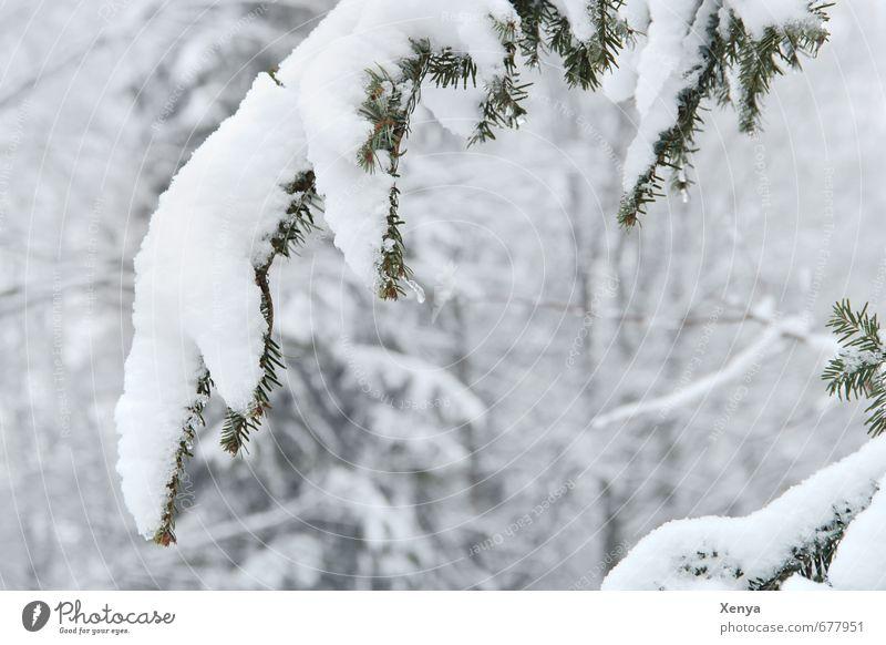 Jetzt wird´s wieder Winter Natur Eis Frost Schnee Pflanze Baum Garten kalt weiß Schneefall schwer Ast gebeugt Zweig Wetter Winterurlaub Außenaufnahme