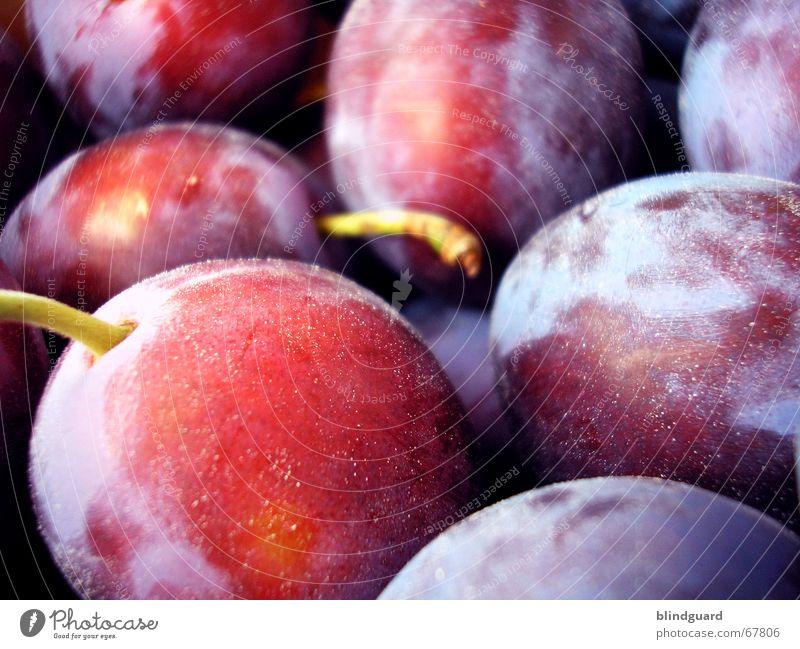 Pflaumen rot violett gepflückt süß Steinfrüchte Frucht Raureif Ernte fruit Stengel