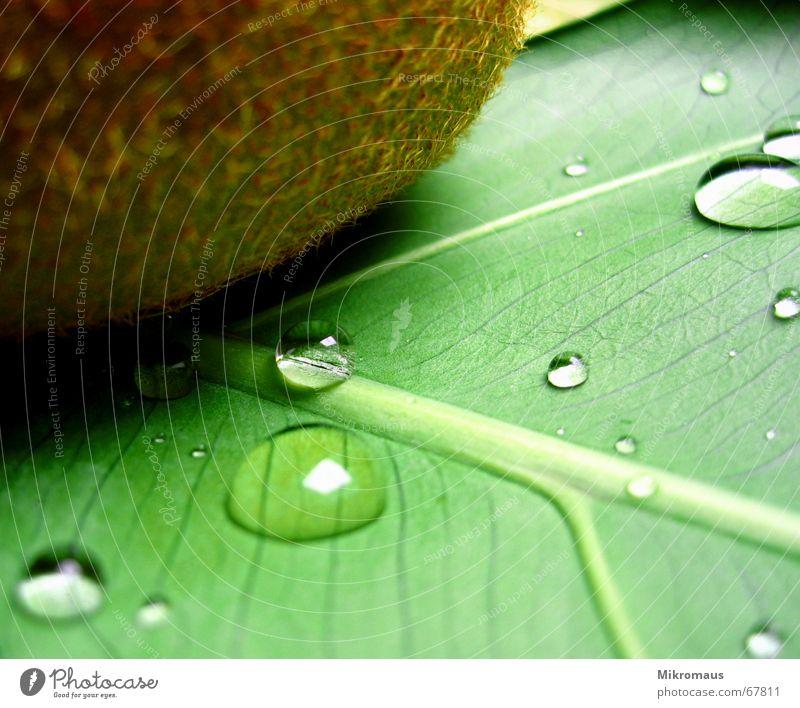 Kiwi mit Tropfen Frucht Ernährung Wellness Gesundheit Wassertropfen Tränen Trinkwasser Regen nass grün Pflanze Blatt Blattadern Gefäße Makroaufnahme Nahaufnahme