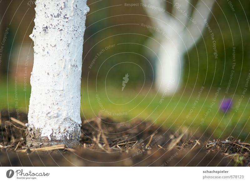 Zeit zum Bäume anstreichen Natur grün weiß Pflanze Baum Umwelt Frühling braun Garten Erde Schutz Schädlinge Pflanzenschutz