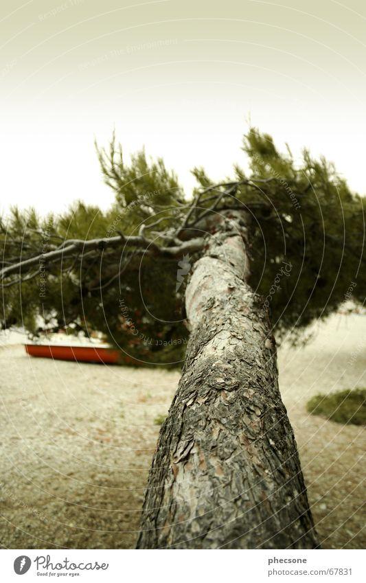 Rainy Sunday Wasser Himmel Baum Meer grün Strand dunkel Holz Regen Wasserfahrzeug orange Insel Tanne Gewitter Kies Türkei