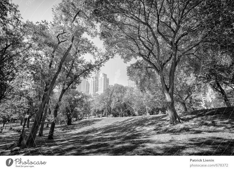Revisit   5 Natur Ferien & Urlaub & Reisen Stadt Pflanze Sommer Erholung ruhig Umwelt Wiese Park Freizeit & Hobby Wetter Lifestyle Hochhaus Schönes Wetter
