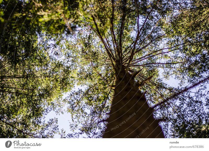 Krone Abenteuer wandern Landwirtschaft Forstwirtschaft Natur Himmel Frühling Sommer Schönes Wetter Baum Blatt Wald Holz atmen träumen Wachstum natürlich oben