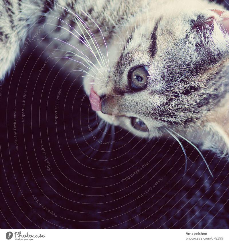 ::14-5:: Tier Haustier Katze Tiergesicht Fell Tierjunges Freude Glück Zufriedenheit Lebensfreude Vertrauen Sicherheit loyal Hauskatze Tierzucht Tierhaltung