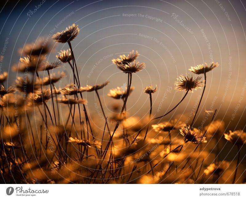 Natur schön Pflanze Sommer Blume Blatt Freude Umwelt Gefühle Liebe Blüte Garten Stimmung Park Fröhlichkeit Urelemente