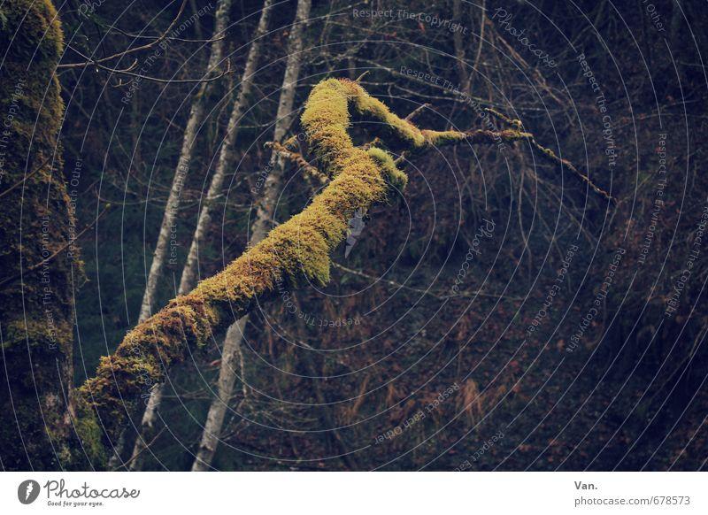Knusper, knusper Knäuschen Natur Pflanze Baum dunkel Wald gelb Herbst braun Ast Baumstamm Moos mystisch Märchenwald