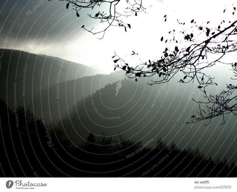es.kommt. dunkel Wald Wolken Baum Hügel schwarz grau weiß böse untergehen Apokalypse Licht Rettung schön Naturphänomene Ast Berge u. Gebirge Regen Himmel