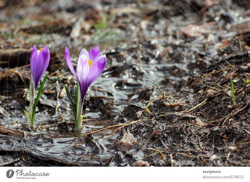 Natur schön grün Farbe Pflanze Blume Blatt Leben Gras Frühling Blüte klein natürlich wild Wachstum frisch