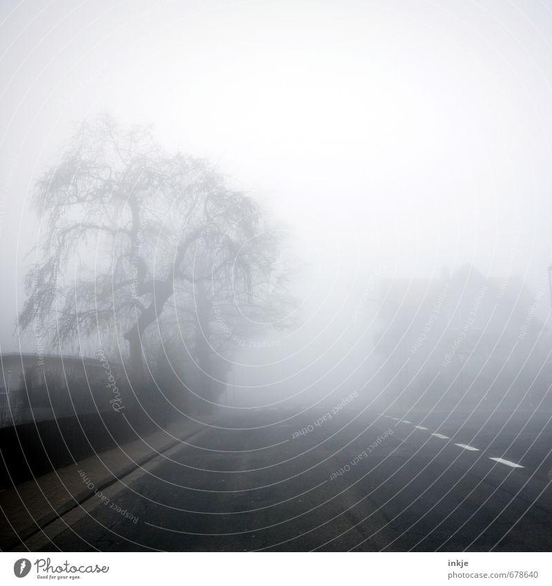 spooky neighbourhood II Stadt Baum Winter dunkel Umwelt Straße Gefühle Herbst Wege & Pfade Stimmung Luft Angst Nebel Verkehr Klima bedrohlich