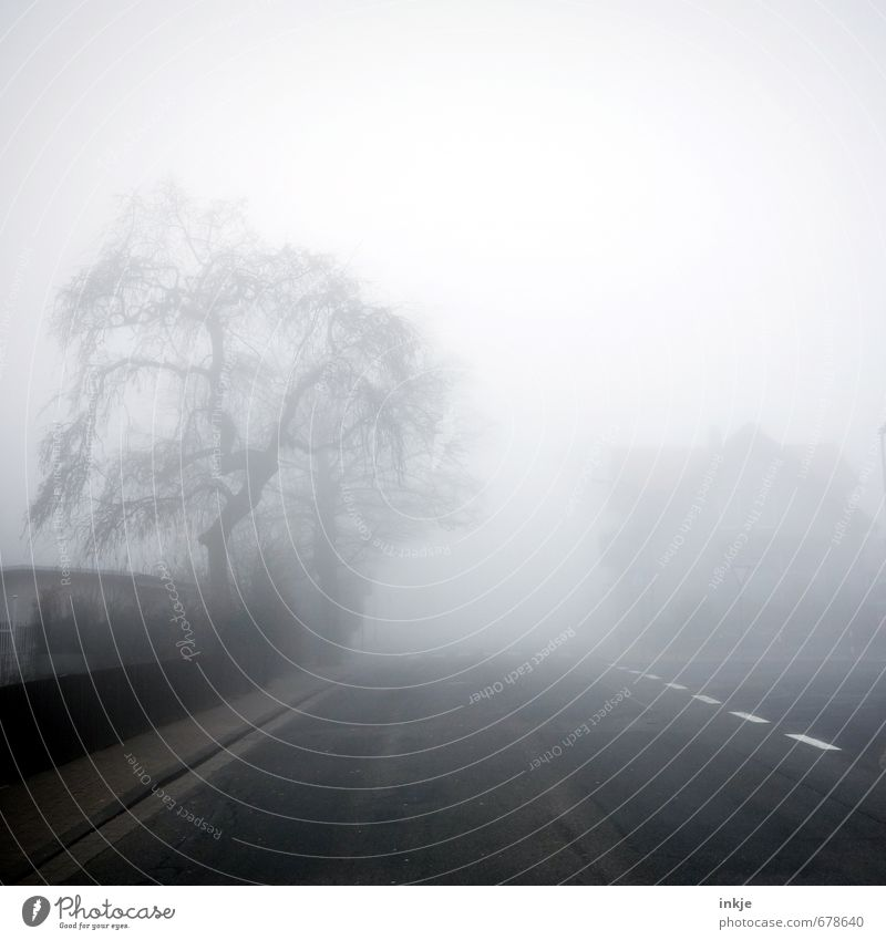 spooky neighbourhood II Umwelt Luft Herbst Winter Klima schlechtes Wetter Nebel Baum Kleinstadt Stadt Stadtrand Menschenleer Zaun Verkehr Verkehrswege