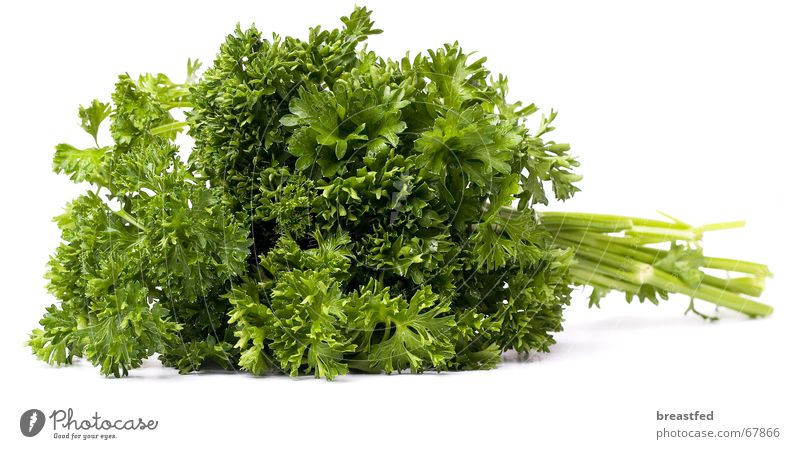 petersilie grün Ernährung Gesundheit Küche Kräuter & Gewürze lecker Mittagessen Pflanze Petersilie