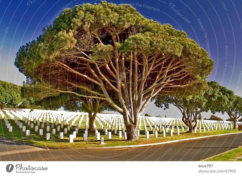 Peaceful at Last Erinnerung Friedhof Soldatenfriedhof Grab Grabstein Zypresse Baum Einsamkeit grün weiß ruhig The Needles Himmel San Diego County