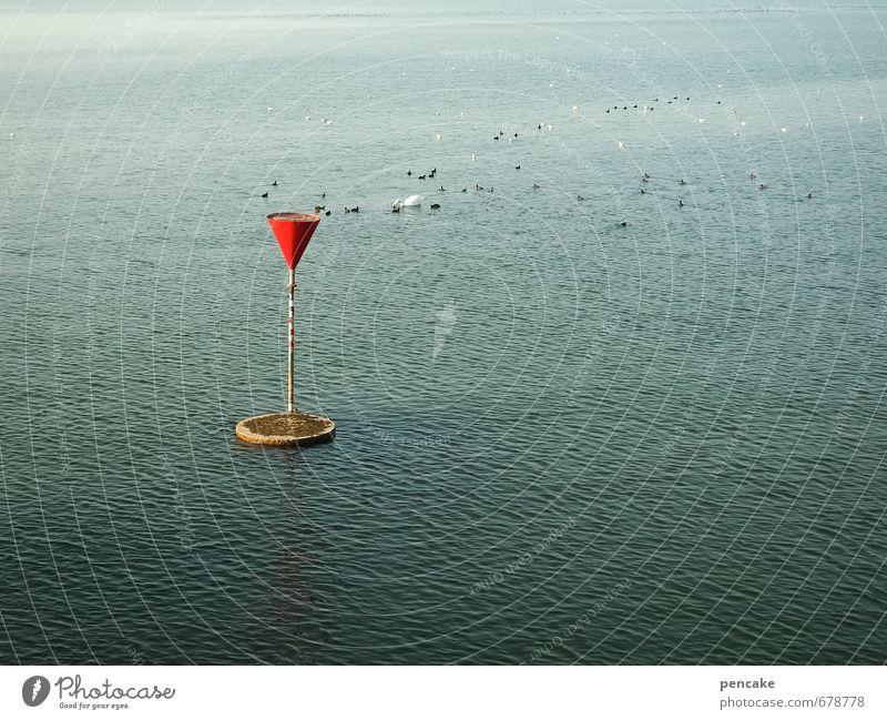 ausschwärmen Natur Landschaft Urelemente Wasser Frühling Schönes Wetter Seeufer Bodensee Vogel Tiergruppe ästhetisch frisch blau rot Trichter Seezeichen Wellen