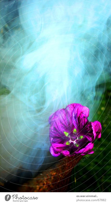 passivraucher. grün schön Blume dunkel Gras Traurigkeit Luft rosa Nebel Brand Aktion Feuer bedrohlich Rauchen violett geheimnisvoll