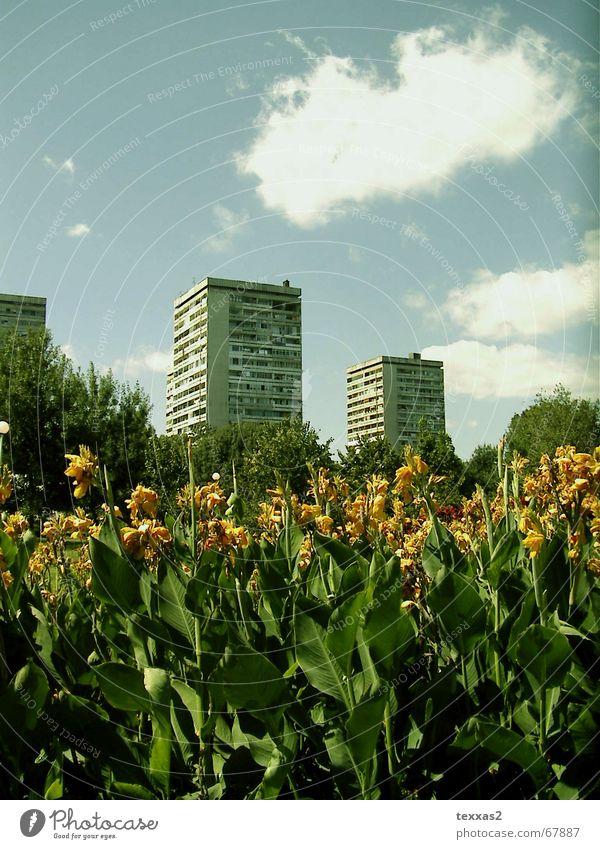 kaschieren auf bulgarisch Blume Haus Traurigkeit Park Hochhaus trist verfallen DDR schäbig Osten Plattenbau Bulgarien