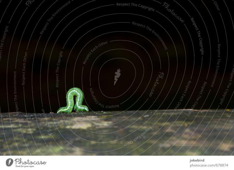 Seitenstreifen grün Holz Wachstum Streifen krabbeln Raupe