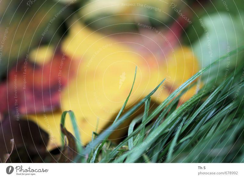 Gras Natur schön Farbe Pflanze Bewegung natürlich elegant Zufriedenheit frei Wachstum ästhetisch Gelassenheit entdecken harmonisch Optimismus